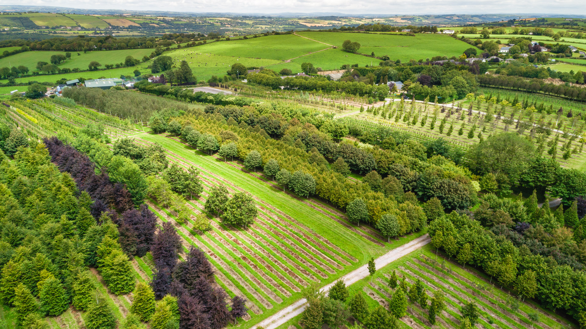 Nangle and Niesen Tree Nursery Cork Aerial View