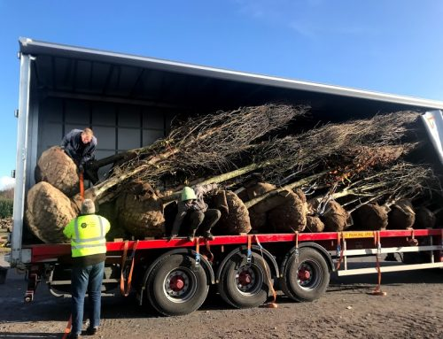 Exporting Trees to the UK